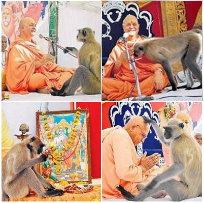 ராம நாமத்தை கேட்க அனுமனாக வெண்குரங்கு நேரில் வந்த அதிசயம்.